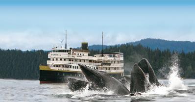 Alaska small ship cruise Whales